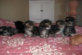 cinq chatons sans-titre1